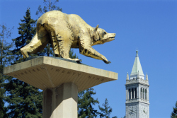 Golden Bear and Campanile on UC Berkeley Campus