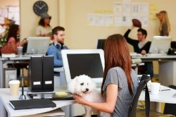 Employee with dog at work