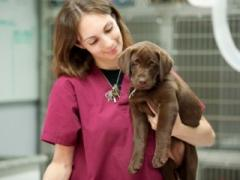 Veterinary Assistant Schools and Training Programs